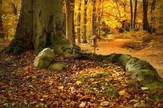 20-autunno