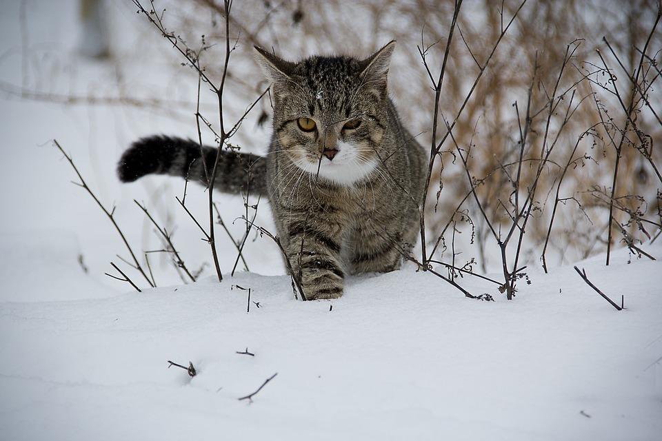 cat-188088_960_720